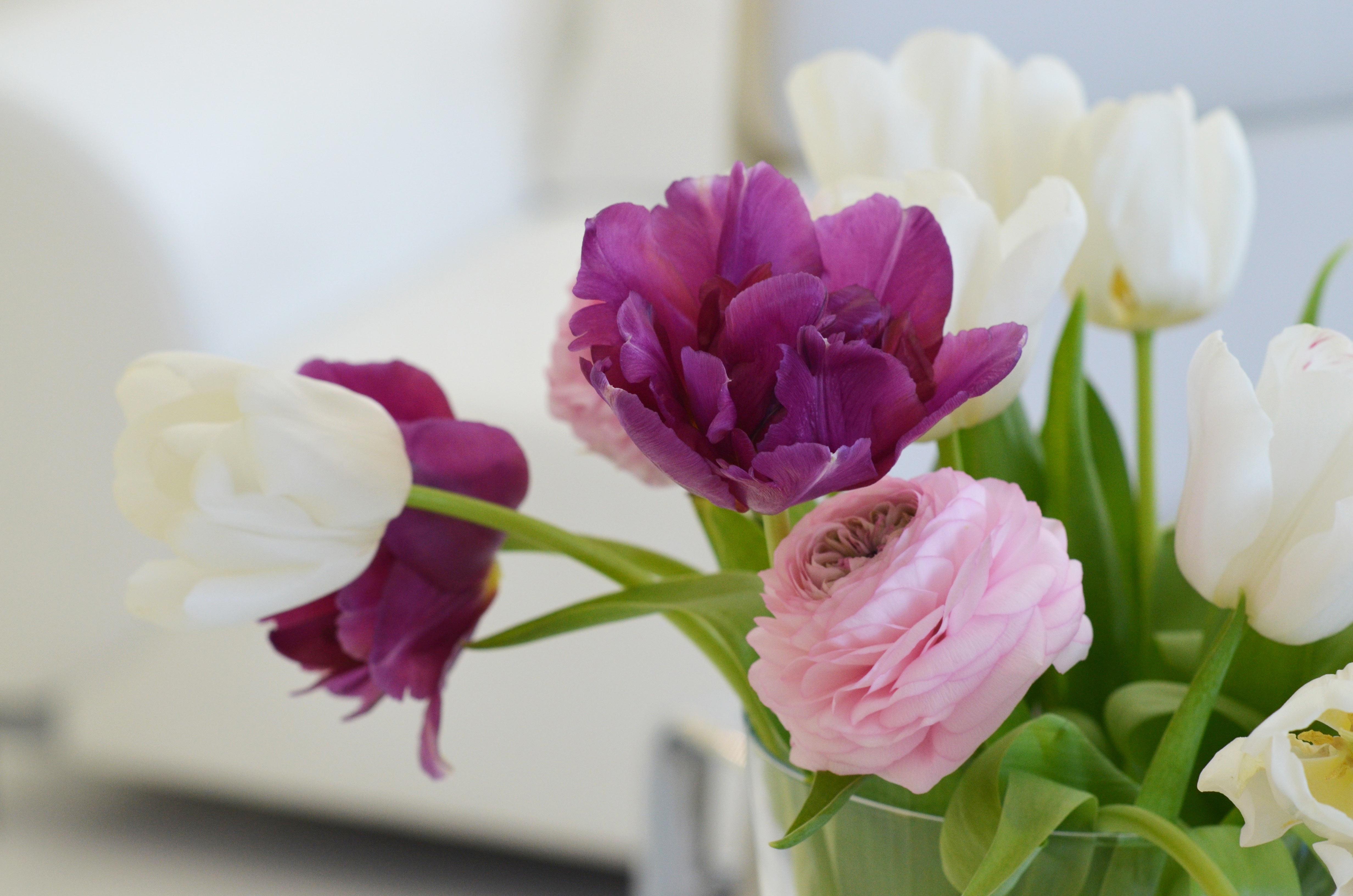 zahnspange locker lila